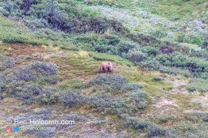 First Bear Sighting