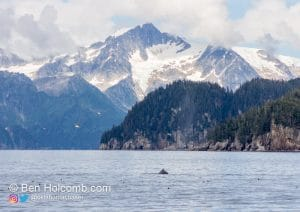 Whale with mountains in the background