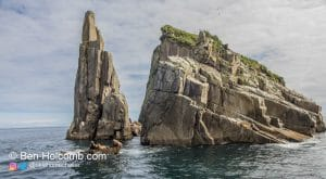 Sea Lions hang out on rocks in Kenai Fjords National Park, Alaska