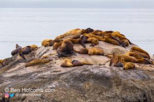 Sea Lions atop a rock near South Marble Island in Glacier Bay National Park near Gustavus, Alaska