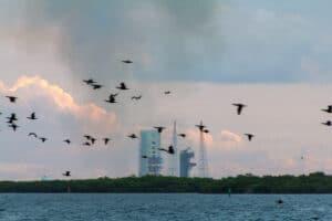 Disturbed birds post launch