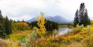 Fall Colors on the Bow River
