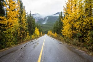 Road in Jasper National Park during the fall color peak