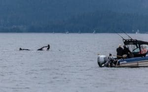 Whale near fishing boat