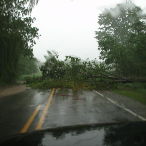 Tree Damage from storms in Lower Michigan
