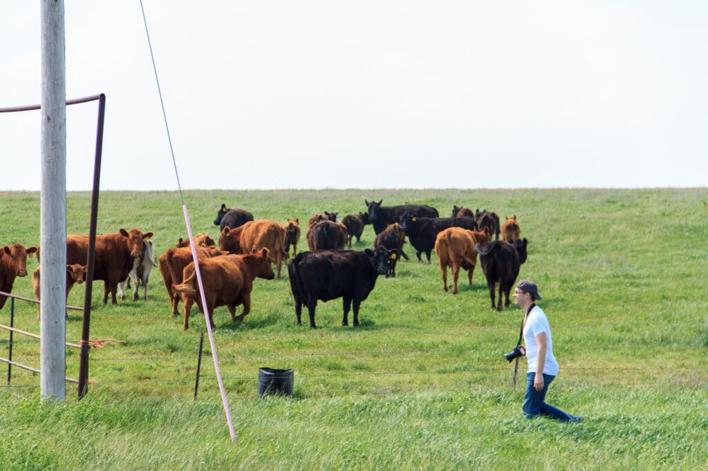Jon running off into a field of cows