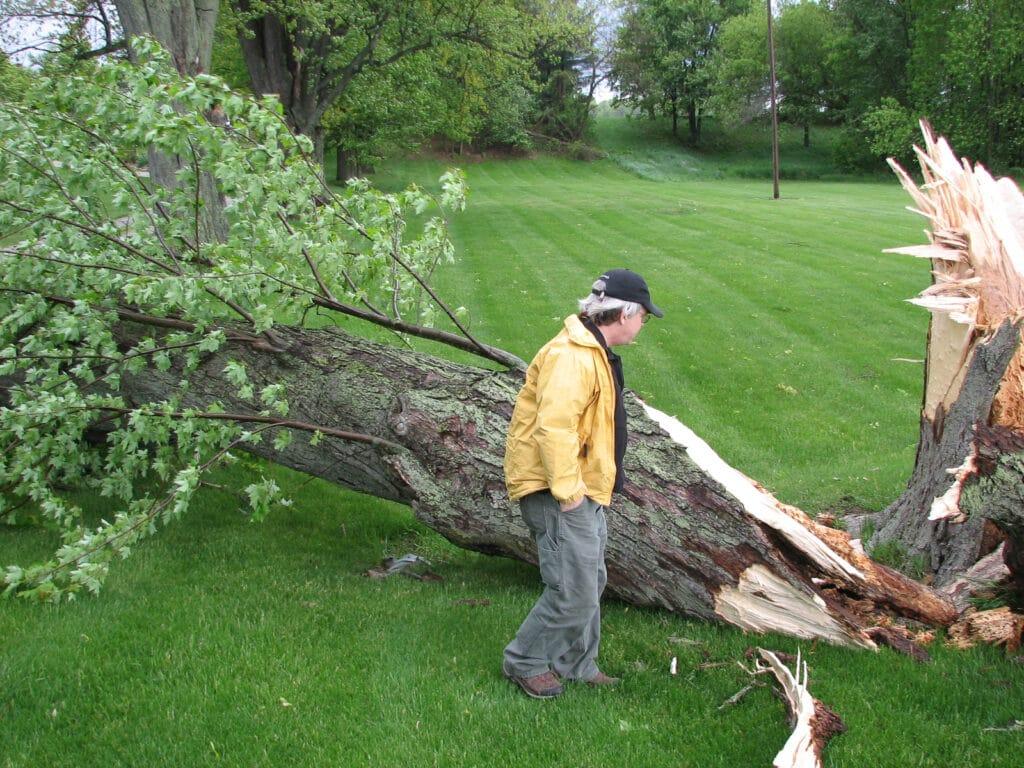 Storm_Tree_Damage.jpg