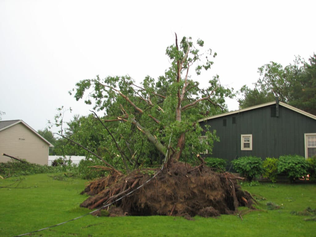 Tree Uprooted in Lansing