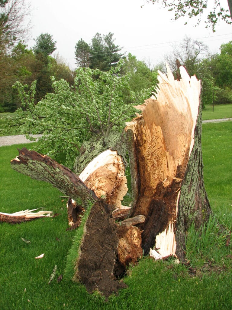 Tree_broken_by_storm.jpg
